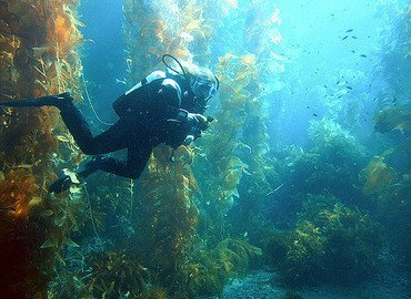 Discover Scuba Diving in Phi phi (Deposit only) - Tour