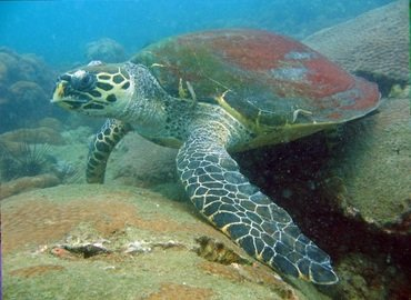 Discover Scuba Diving in Pattaya (Deposit Only) - Tour