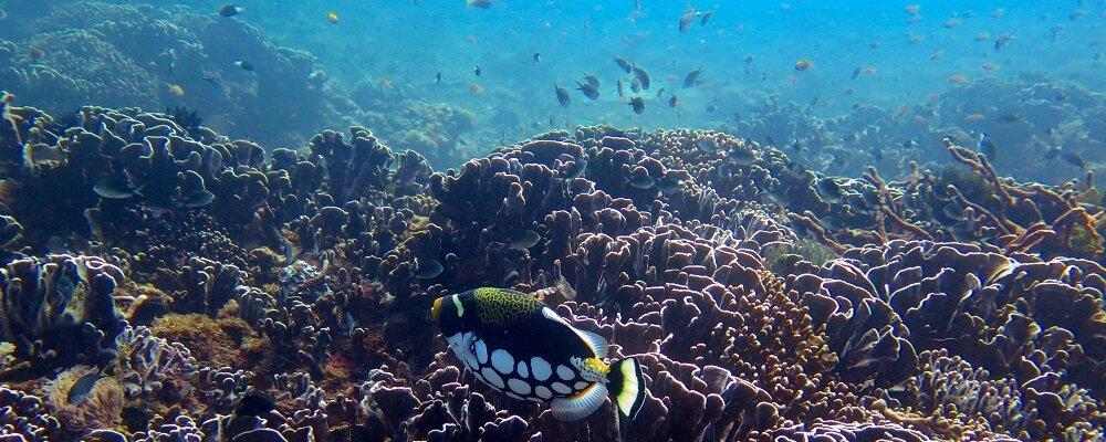 Discover Scuba Dive - Gilli Air - Tour