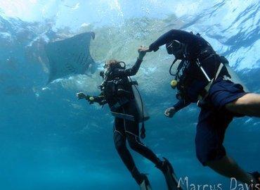 Indo Divers Lembongan - Tour