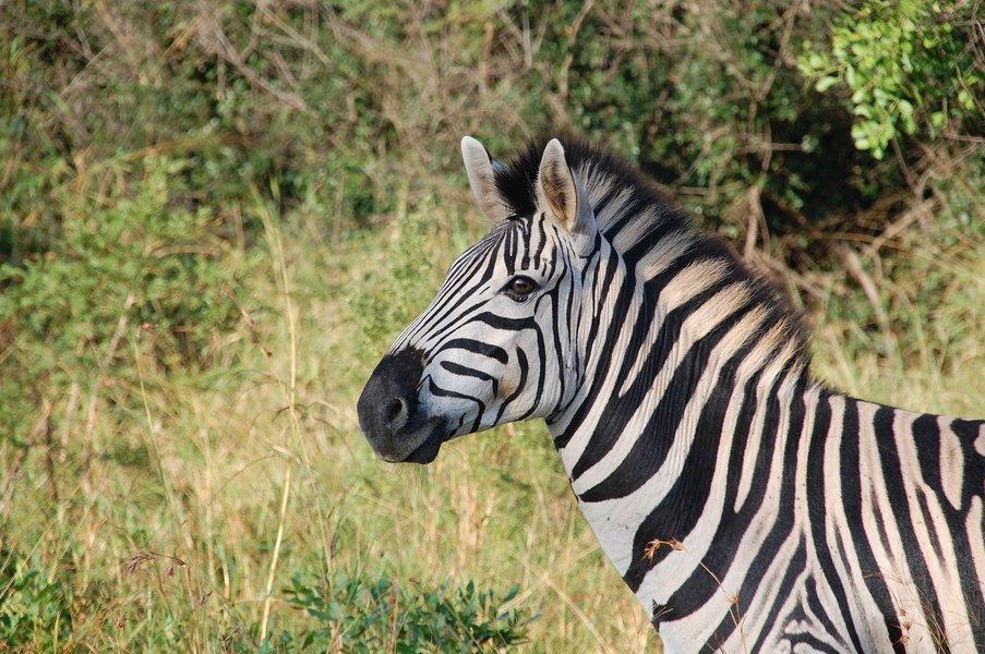 Spectacular South Africa - Tour