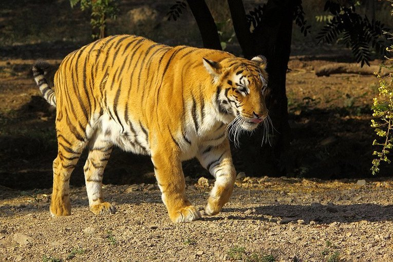 Ranthambore National Park Safari - Tour