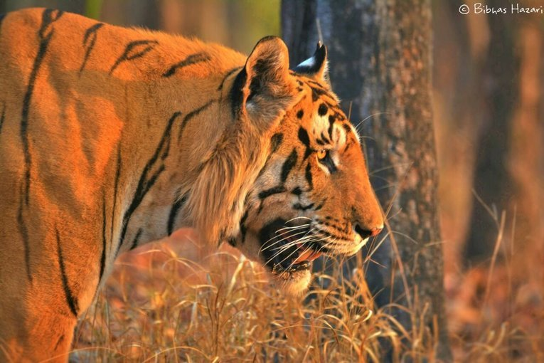Bandhavgarh Wildlife Safari - Tour