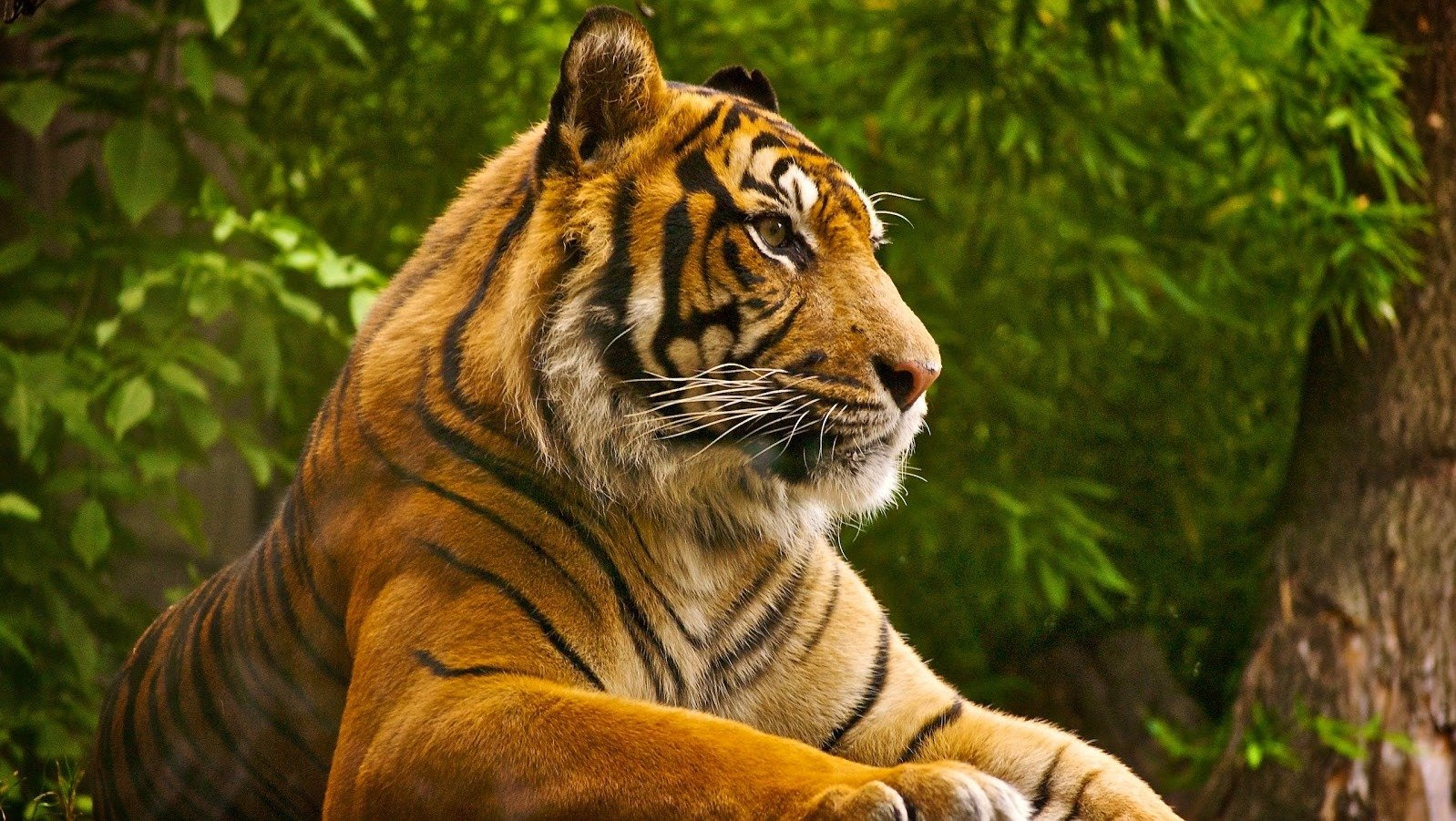 Image result for Wildlife safari- witness the ferocious tigers