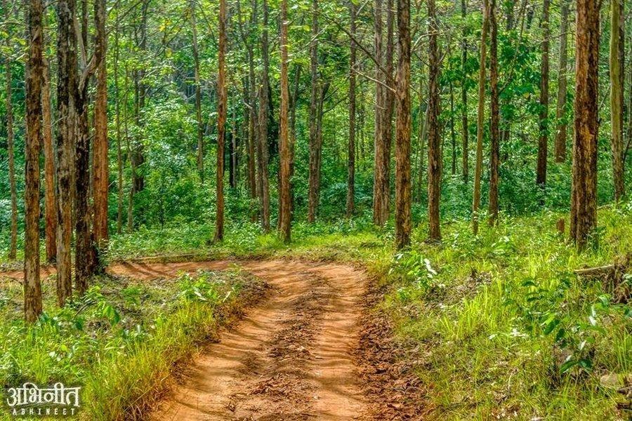 Dandeli Forest Adventure Tour - Tour