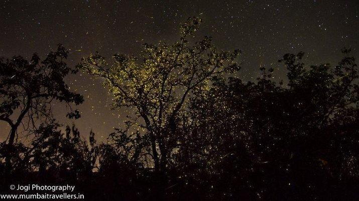 Bhandardara Fireflies Special Camping - Tour