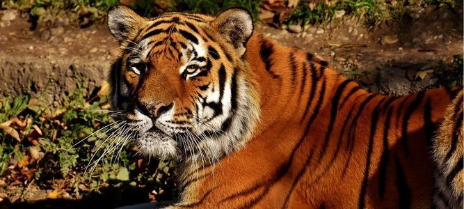 Tadoba Wildlife Jungle Safari - Core Zone Special