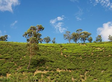 KANDY, NUWARA ELIYA, BENTOTA WITH COLOMBO - Tour