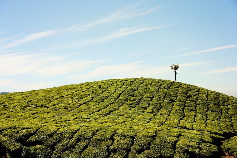 Trekking in Laxmi Hills - Munnar - Tour