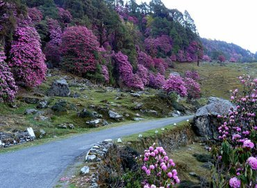 Chopta-Deoriatal-Tungnath – Scenic Garhwal - Tour 01 - Tour