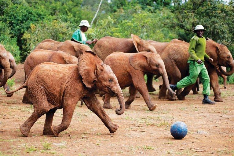 Kenya Trip - Wildlife, History & Adrenaline! - Tour