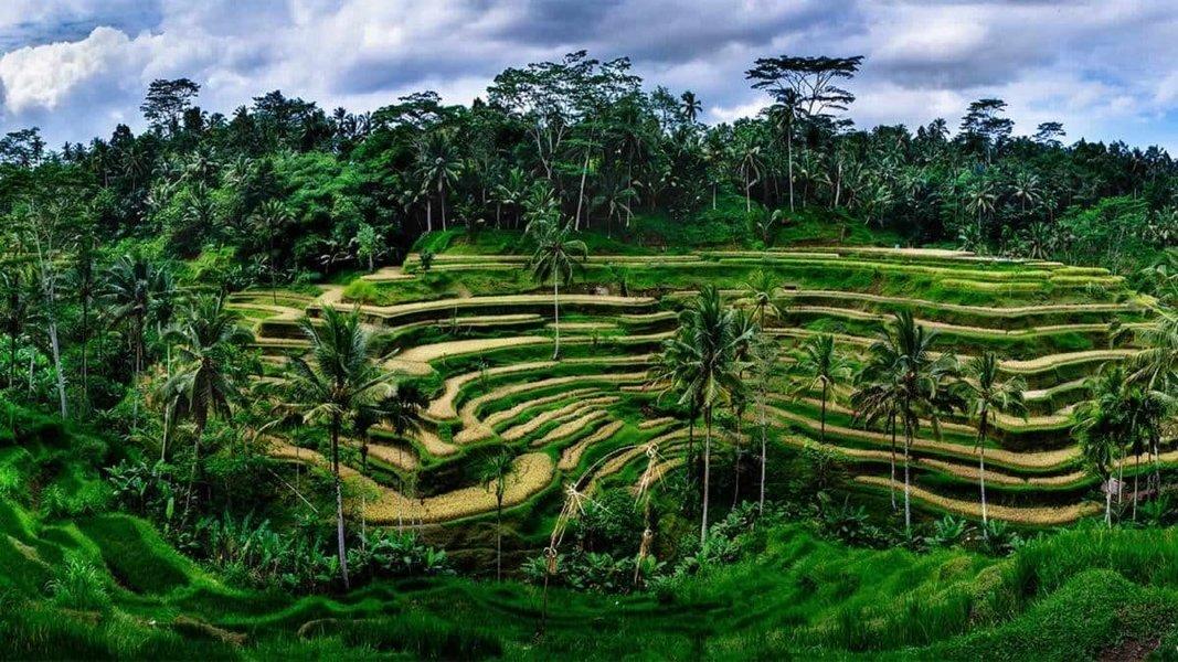 Bewitching Bali - Tour