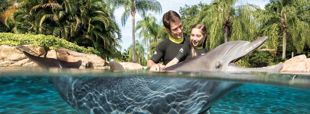 Dubai Dolphinarium Dolphin Encounter - Tour