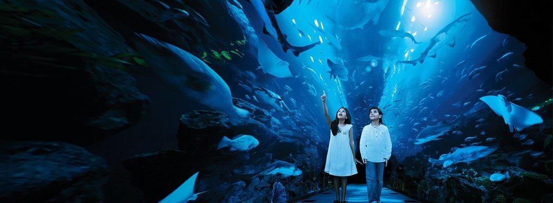 Dubai Aquarium and Underwater Zoo - Tour