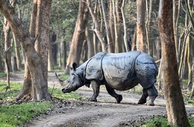 Pobitora Wildlife Sanctuary Half day Taxi Tour - Tour