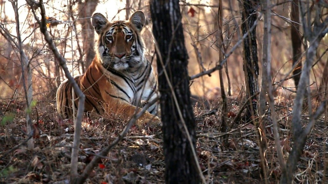 Tipeshwar Wildlife Safari - Tour