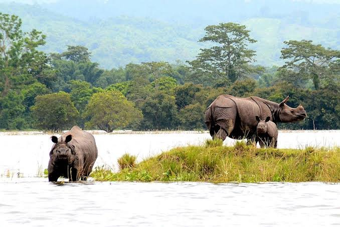 Tour de Kaziranga National Park with stay in Eco Camp for 2 nights 3 days - Tour