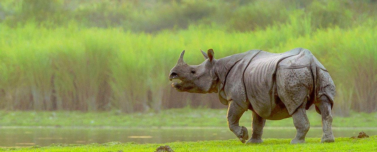 4 Nights 5 days Taxi Tour of Kaziranga National Park with Shillong and Cherrapunji - Tour