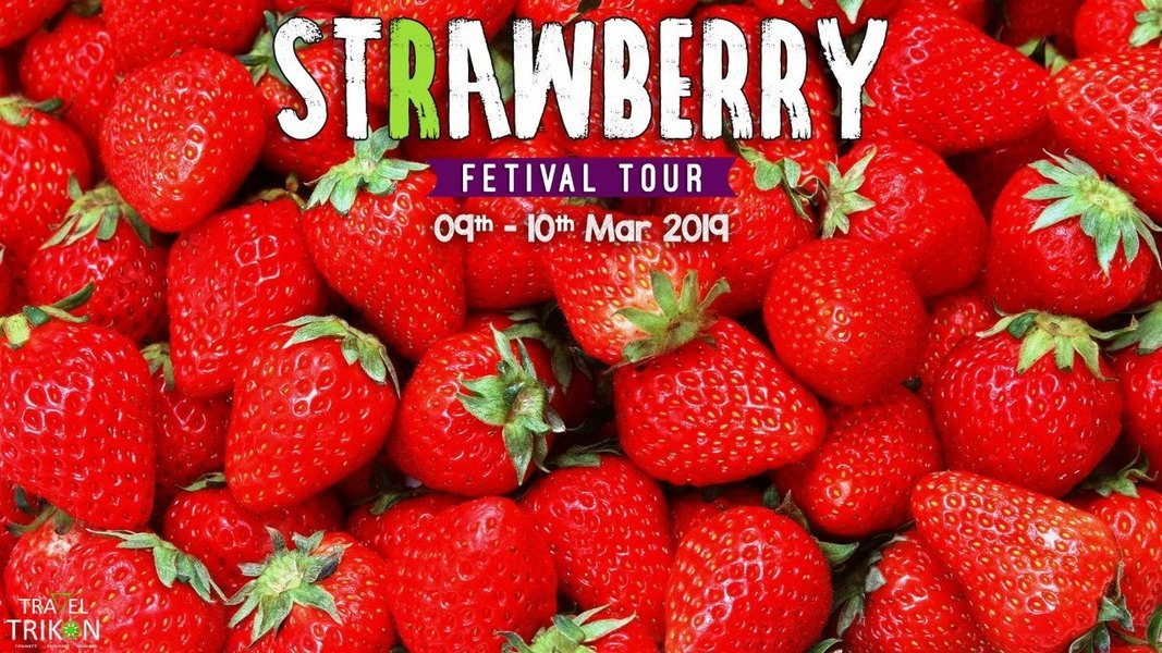Strawberry Festival Tour - Tour