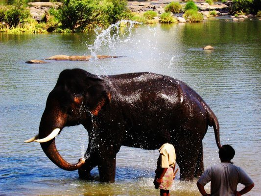 Dubare Elephant Activities - Tour