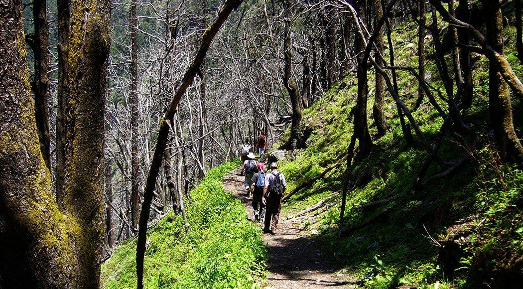 Kuari Pass Trek - Tour