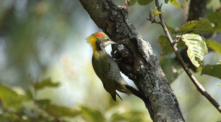 Raja Ji National Park: Half Day Safari - Tour