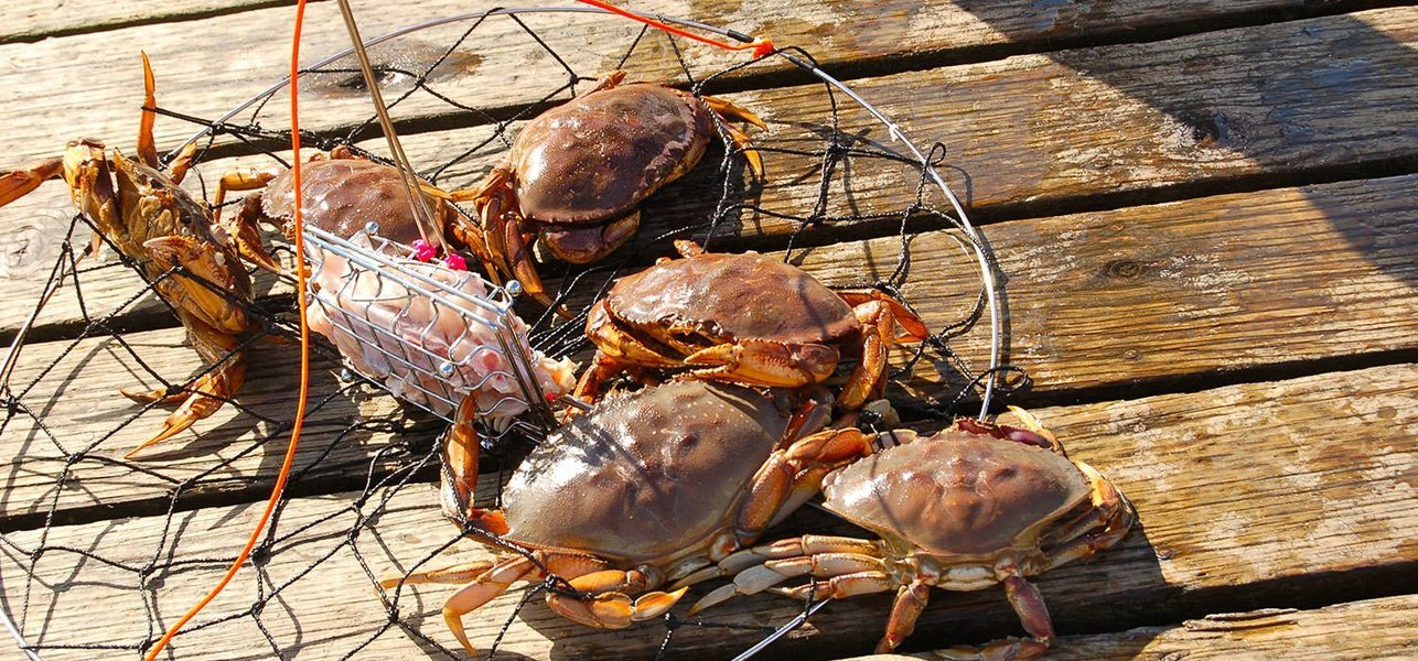 Crab Catching with Crab Dinner - Tour