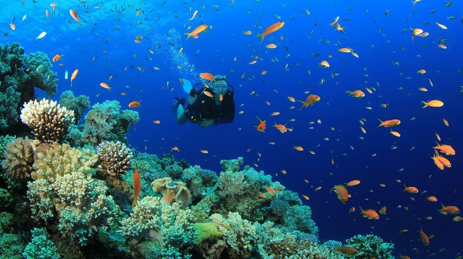 Scuba Dive at Grande island - Tour