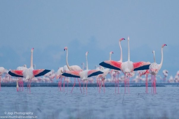 THANE CREEK FLAMINGO SANCTUARY - Tour