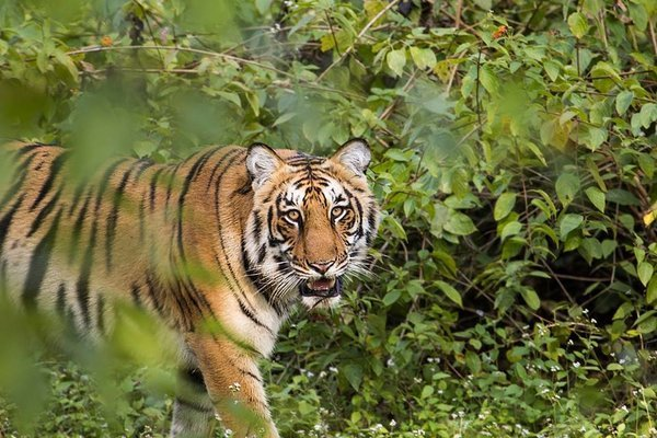 JIM CORBETT TIGER SAFARI - Tour