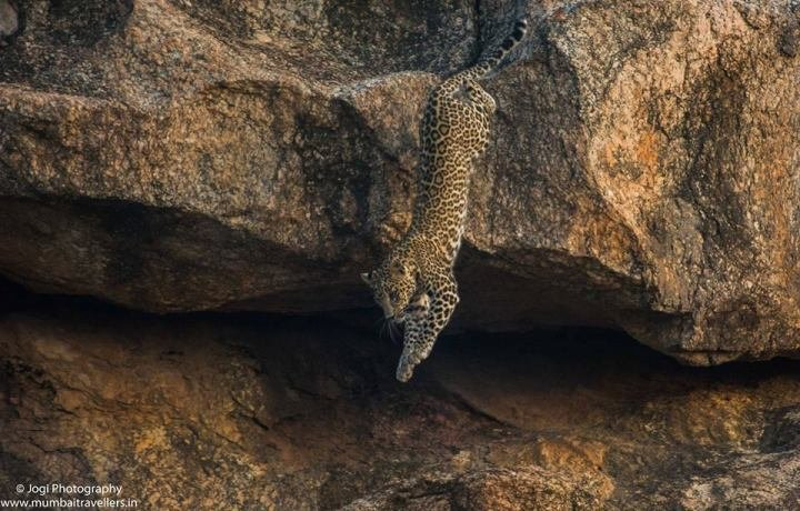 BERA LEOPARD SAFARI - Tour