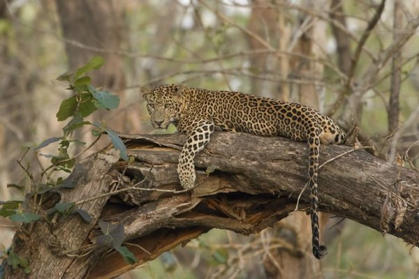 KABINI WILDLIFE SAFARI - Tour