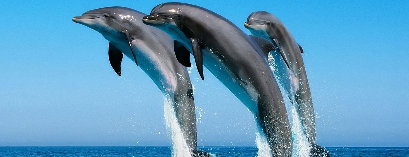 Dolphin Sightseeing - Tour