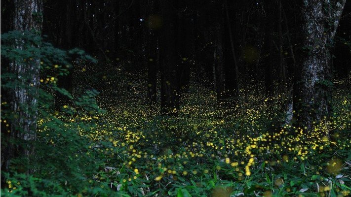 KALAVANTIN FIREFLIES TREK - Tour
