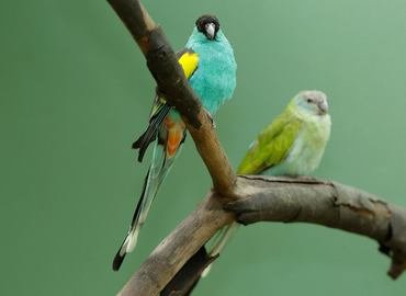 Jurong Bird Park, Sightseeing in Singapore - Tour