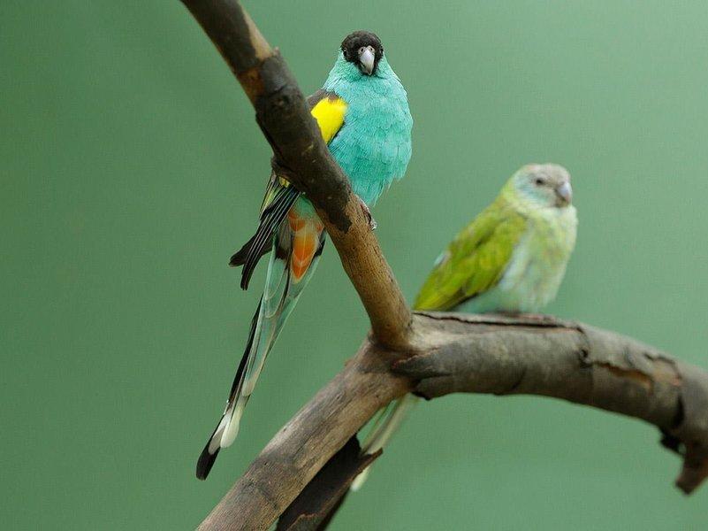 Jurong Bird Park, Sightseeing in Singapore - Tour