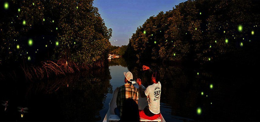 Country Side & Fireflies Night Tour, Sightseeing in Kuala Lumpur - Tour