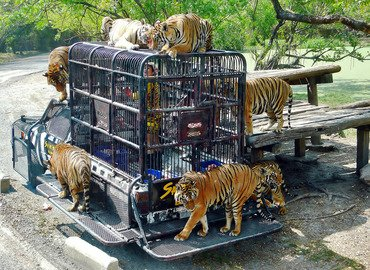 Safari World and Marine Park with Lunch, Sightseeing in Bangkok - Tour