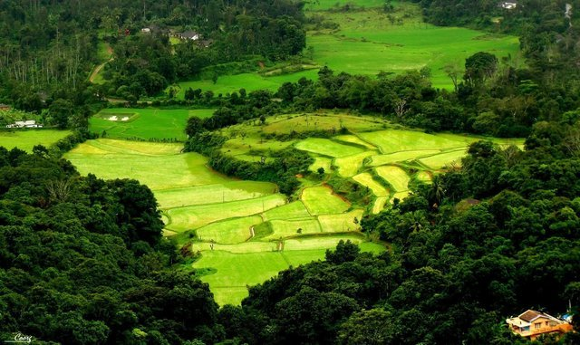 Coorg India tour packages from Bangalore - Collection