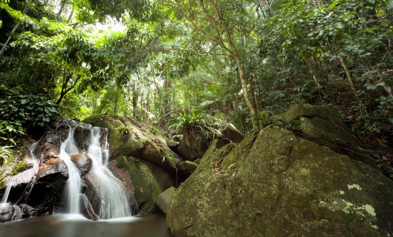 Jungle Trekking in Pulau Rainforest, Sightseeing in Langkawi - Tour