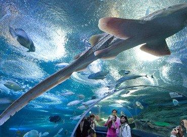 Underwater World, Sightseeing in Pattaya - Tour