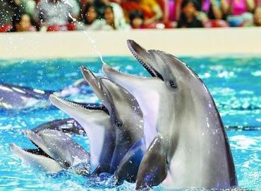 Dubai Dolphinarium - Dolphin & Seal Show with transfers - Tour