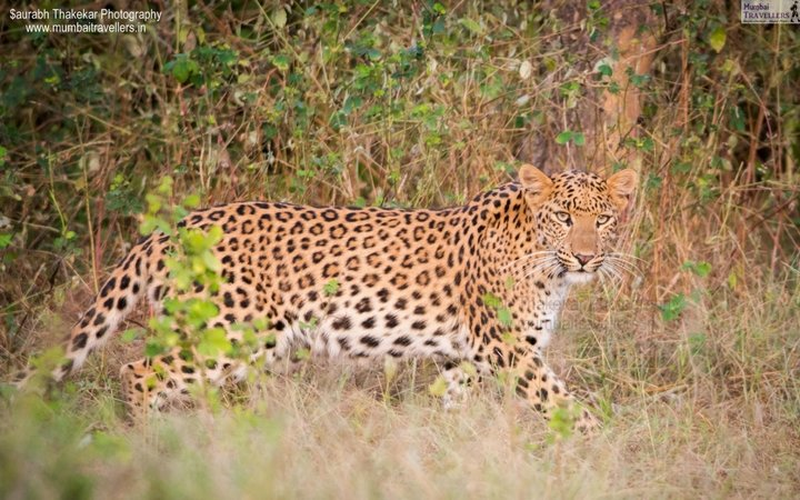 Jhalana Leopard Expedition - Tour