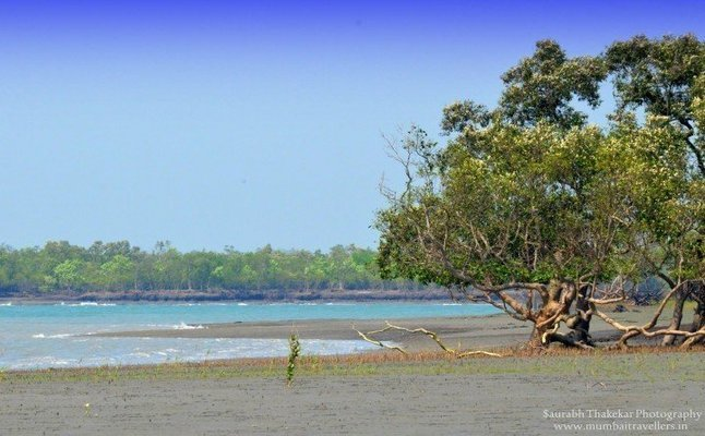 SUNDARBAN WILDLIFE TOUR - Tour