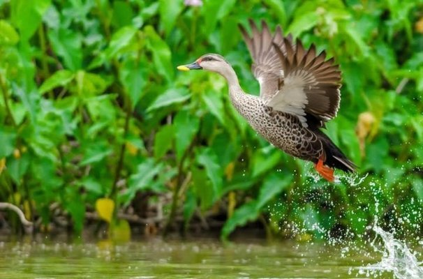 Bharatpur & Chambal Bird Photography Expedition - Tour