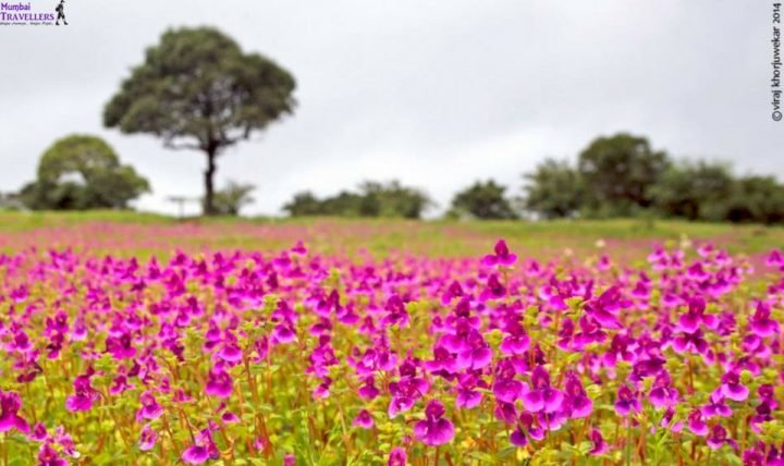 KAAS PLATEAU : 1 DAY TRIP - Tour