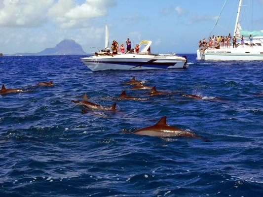 Speed Boat Thrills Tour, Sightseeing in Mauritius - Tour