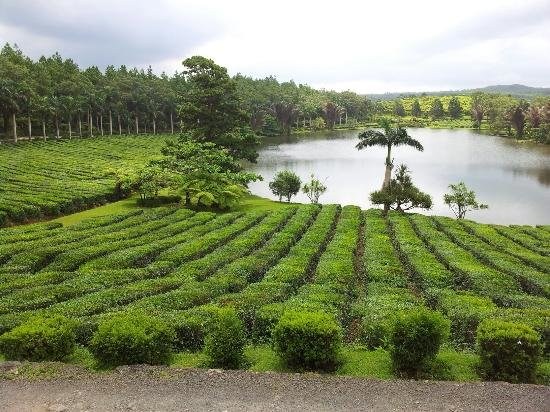Tea Route Tour, Sightseeing in Mauritius - Tour