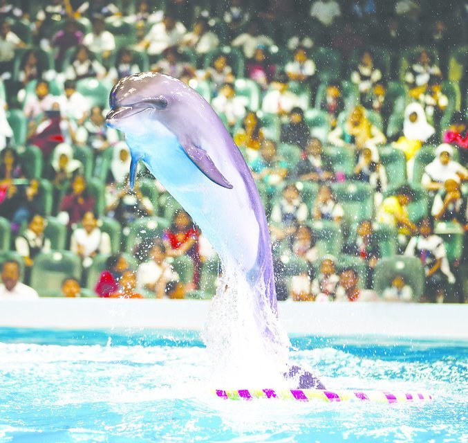 Dubai Dolphinarium Show with Dhow Cruise, Dinner and Live Entertainment - Tour