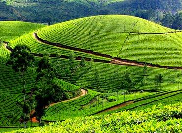 Tour Package To Kerala 04 Days with Thekkady - Tour